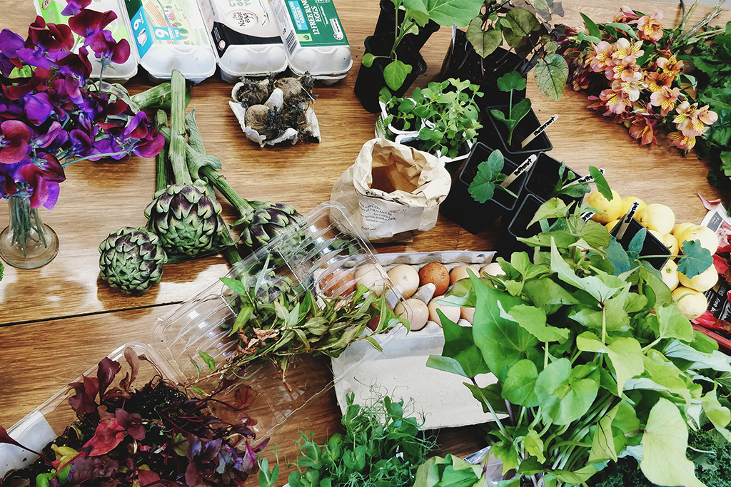 A photograph from the Crop Swap, of a table filled with produce - from artichoke hearts, to seedlings, herbs, flowers, and more.
